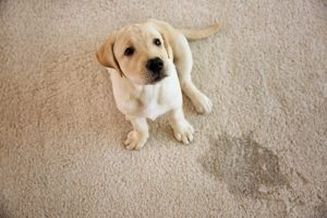 Puppy mistakes are no problem for Khouria's